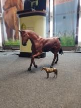 Pferde-Modelle